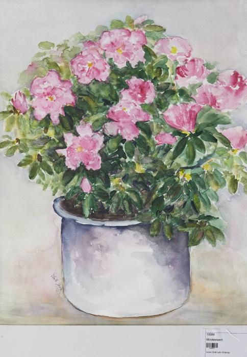 Blühende Topfpflanze