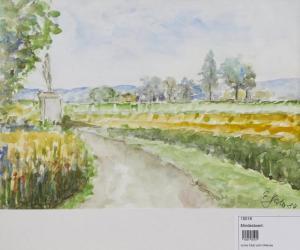 Weg durch Felder
