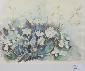 Weiß blühende Pflanze